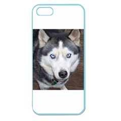 Siberian Husky Blue Eyed Apple Seamless iPhone 5 Case (Color)