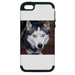 Siberian Husky Blue Eyed Apple iPhone 5 Hardshell Case (PC+Silicone)
