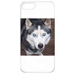 Siberian Husky Blue Eyed Apple iPhone 5 Classic Hardshell Case