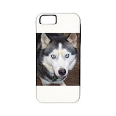 Siberian Husky Blue Eyed Apple iPhone 5 Classic Hardshell Case (PC+Silicone)