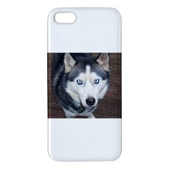 Siberian Husky Blue Eyed Apple iPhone 5 Premium Hardshell Case