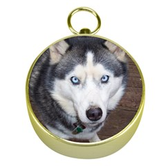 Siberian Husky Blue Eyed Gold Compasses