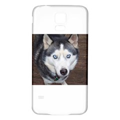 Siberian Husky Blue Eyed Samsung Galaxy S5 Back Case (White)