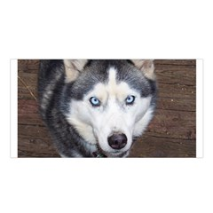 Siberian Husky Blue Eyed Satin Shawl