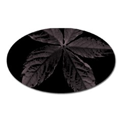 Pink Xray Flower Oval Magnet