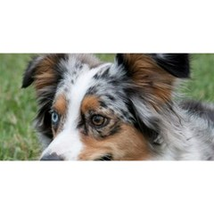 Blue Merle Miniature American Shepherd YOU ARE INVITED 3D Greeting Card (8x4)