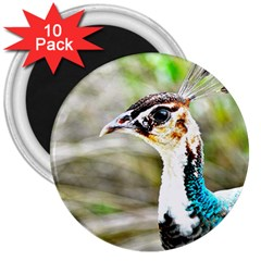 Peahen 3  Button Magnet (10 Pack)