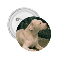 Dogo Argentino Laying  2.25  Buttons