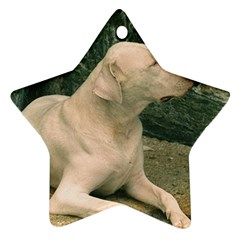 Dogo Argentino Laying  Ornament (Star)
