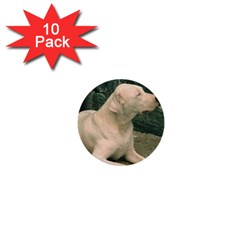 Dogo Argentino Laying  1  Mini Buttons (10 pack)