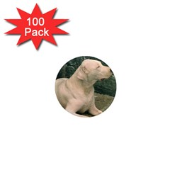 Dogo Argentino Laying  1  Mini Magnets (100 pack)