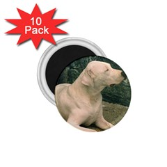 Dogo Argentino Laying  1.75  Magnets (10 pack)