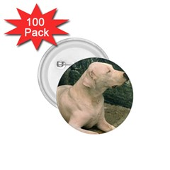 Dogo Argentino Laying  1.75  Buttons (100 pack)