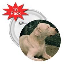 Dogo Argentino Laying  2.25  Buttons (10 pack)