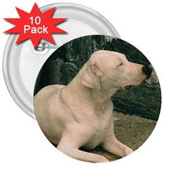 Dogo Argentino Laying  3  Buttons (10 pack)