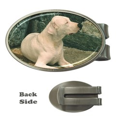 Dogo Argentino Laying  Money Clips (Oval)