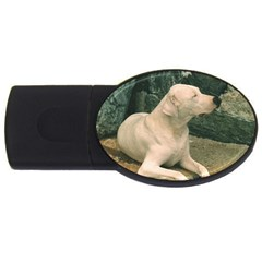 Dogo Argentino Laying  USB Flash Drive Oval (4 GB)
