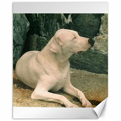Dogo Argentino Laying  Canvas 16  x 20