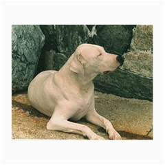 Dogo Argentino Laying  Small Glasses Cloth (2-Side)