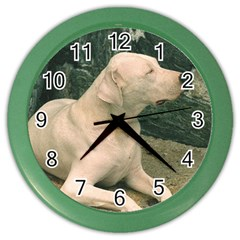 Dogo Argentino Laying  Color Wall Clocks