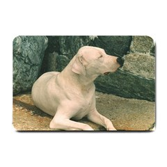 Dogo Argentino Laying  Small Doormat