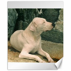 Dogo Argentino Laying  Canvas 11  x 14