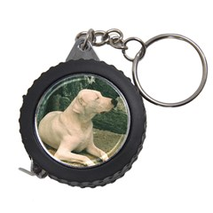 Dogo Argentino Laying  Measuring Tapes