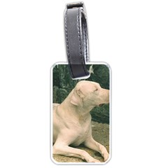 Dogo Argentino Laying  Luggage Tags (Two Sides)