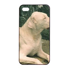 Dogo Argentino Laying  Apple iPhone 4/4s Seamless Case (Black)