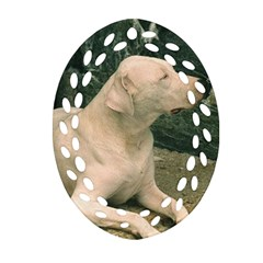 Dogo Argentino Laying  Oval Filigree Ornament (2-Side)
