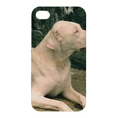 Dogo Argentino Laying  Apple iPhone 4/4S Hardshell Case