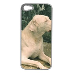 Dogo Argentino Laying  Apple iPhone 5 Case (Silver)