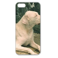 Dogo Argentino Laying  Apple Seamless iPhone 5 Case (Clear)