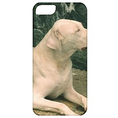 Dogo Argentino Laying  Apple iPhone 5 Classic Hardshell Case