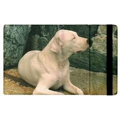 Dogo Argentino Laying  Apple iPad 3/4 Flip Case
