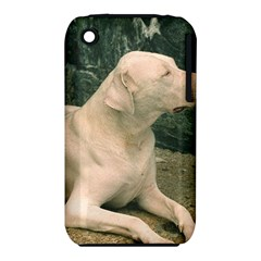 Dogo Argentino Laying  iPhone 3S/3GS