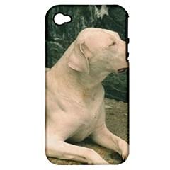 Dogo Argentino Laying  Apple iPhone 4/4S Hardshell Case (PC+Silicone)