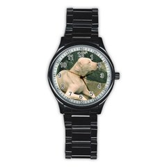 Dogo Argentino Laying  Stainless Steel Round Watch