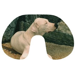 Dogo Argentino Laying  Travel Neck Pillows