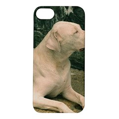 Dogo Argentino Laying  Apple iPhone 5S/ SE Hardshell Case