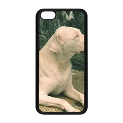 Dogo Argentino Laying  Apple iPhone 5C Seamless Case (Black)