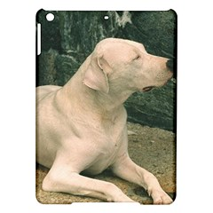 Dogo Argentino Laying  iPad Air Hardshell Cases