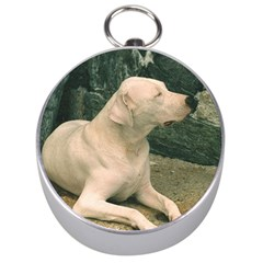 Dogo Argentino Laying  Silver Compasses