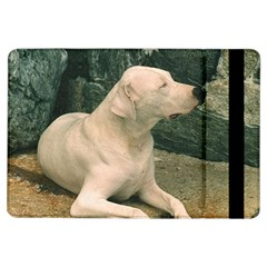 Dogo Argentino Laying  iPad Air Flip