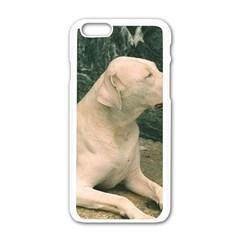 Dogo Argentino Laying  Apple iPhone 6/6S White Enamel Case