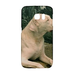 Dogo Argentino Laying  Galaxy S6 Edge
