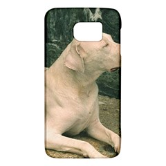 Dogo Argentino Laying  Galaxy S6