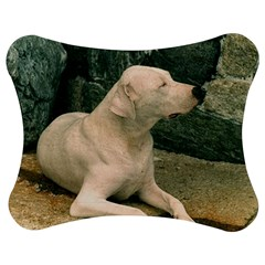 Dogo Argentino Laying  Jigsaw Puzzle Photo Stand (Bow)