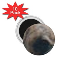 Whippet Brindle Eyes  1.75  Magnets (10 pack)