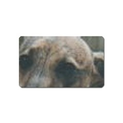 Whippet Brindle Eyes  Magnet (Name Card)